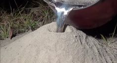 What You Get When You Pour Molten Aluminum Into An Ant Hill - Digg