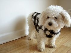 Cashmere Lumberjack Dog Vest  Classic Plaid SM By Shop KCQ On Etsy $60.00 Dog Vest, Poodle, Cashmere, Plaid, Jacket, Pets, Unique Jewelry, Classic, Handmade Gifts