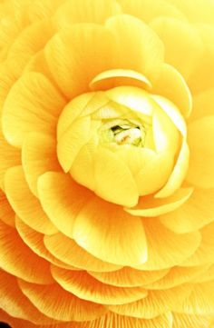 All orange flowers and yellow flowers are beautiful and with meanings of their own. Orange Flowers, My Flower, Beautiful Flowers, Yellow Roses, Jaune Orange, Macro Flower, Mellow Yellow, Color Yellow, Bright Yellow