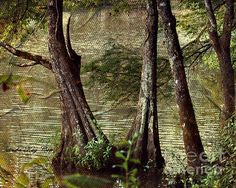This is an original photograph which has been digitally enhanced to give you the appearance of a vintage art canvas to grace the walls of your home or office. This image is of old cypress trees on the bank of a lazy river which is meandering along a heavily wooded area in southern Alabama, near Andalusia.