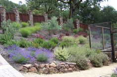 Dry hillside garden with deer visitors in Sonoma County.  Kim Pearson Designs