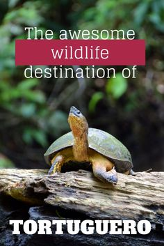 The Ultimate Travel Guide to the wildlife-rich Tortuguero, Costa Rica. Where to eat and stay, what to do & more.