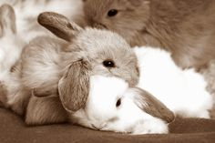 bunny buddies! i want my dad to get me a baby bunny!