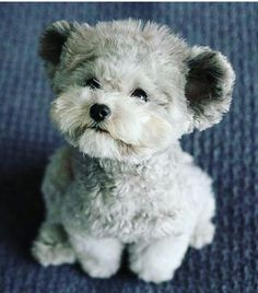 What a cute little furbaby bear look-a-like! Too cute! :)