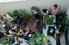 Taller de Autocultico. Trasplante de plantas a nuevas macetas.