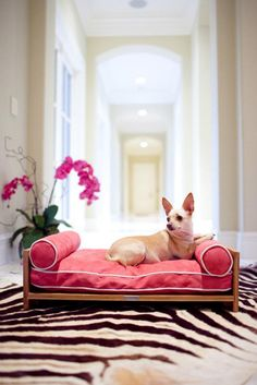 Pet Lounge Studios: Beds & Bowls For Pampered Pets Dogs Cats Pet Shop, Dog Furniture, Chihuahua Love, Pet Beds, Puppy Beds, Diy Stuffed Animals, Pet Accessories, Fur Babies, Cute Dogs