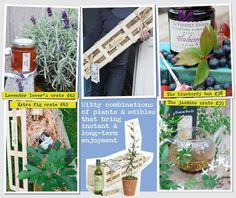 Great gift ideas for those that love gardening/cooking etc....  Gardening Gifts and Plant Gifts : Send plants as gifts for Gardeners from The Gluttonous Gardener