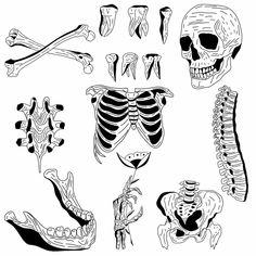 Medical Illustration, Illustration Art, Stick Figure Tattoo, Piercings, Line Art Tattoos, Skeleton Art, Funky Art, A Level Art, Tattoo Sketches