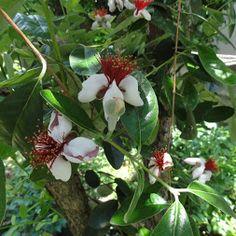 ホーム ガーデン Home Garden - Berry ベリー類 - コミュニティ - Google+