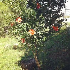 #paperroses #artinstallation #aliceinwonderland