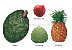 Pineapple  Definition of Pineapple by MerriamWebster