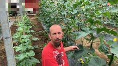 Uborkatermesztés Make It Yourself, Garden, Garten, Lawn And Garden, Gardens, Gardening, Outdoor, Yard, Tuin