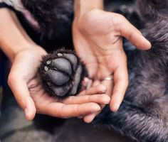Paw Care: Taking Care of Your Dogs Feet. Yes, your dog's feet are made for walking, but did you know that those little paws are also designed for protecting?