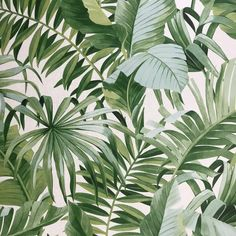 Lavenia L x W Wallpaper Roll Palm Leaf Wallpaper, Tropical Wallpaper, Green Wallpaper, Wallpaper Roll, Wallpaper Plants, Leave In, Photo Wall Collage, Picture Wall, Hawaiian Party Decorations
