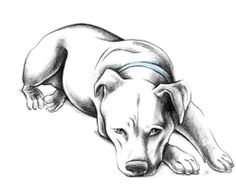 drawing pit bulls | generally more of a greyhound lady, but here you are: