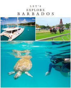 Barbados, Travel Tours, Travel Destinations, Luxury Travel, Explore, Love, World, Beautiful, Scouts