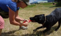Meet Ruger: the American dog who put 150 African poachers out of business (via The Guardian) (8 March 2016) Highlights Ruger, a rescued dog who has been trained to sniff out weapons, ivory, and other wildlife contraband to help with anti-poaching efforts.