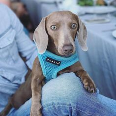 What do you mean it is monday and you have to leave  IG @lychee_is_here #sausagedoglove