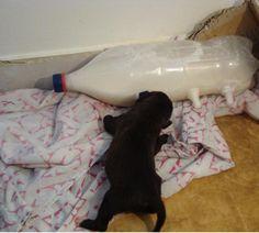 Veterinário inventou uma mãe artificial e ajudou a salvar a vida desse cachorrinho.... ainda tem gente inteligente e de bom coração nesse mundo !!