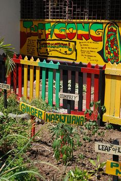 Garden at the Bob Marley museum - Kingston...