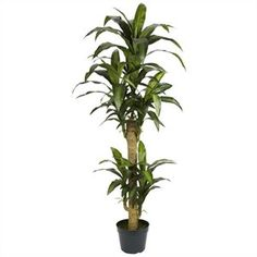 Nearly Natural 5' Yucca Silk Plant in Green