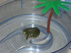 Mini pet turtle in a plastic pond. I had two turtles in a similiar plastic pond with palm tree. Their names were Goldie and Garnnie after the nicest couple than owned and ran the Gulf gas station beside my grandparents home.
