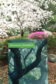The beautiful Descanso Gardens are a must see in Southern California