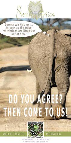 Teen Volunteer, Volunteer Services, Charity Organizations, Gap Year, Africa Travel, Website Template, South Africa, Wildlife, How To Plan