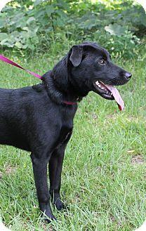 Prattville, AL - Labrador Retriever Mix. Meet Sarah 19910, a dog for adoption. http://www.adoptapet.com/pet/11262976-prattville-alabama-labrador-retriever-mix