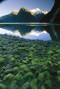 Mountains reflect in Milford Sound, South Island, Gallery Wrapped Canvas by National Geographic Most Beautiful Gardens, Beautiful Places, Amazing Places, New Zealand Snow, Places Around The World, Around The Worlds, New Zealand Landscape, New Zealand Houses, New Zealand South Island