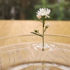 """""""OoDesign a mis au point un concept de vase prenant la forme d'un petit module translucide en verre dans lequel il suffit de glisser la tige de la fleur. Le résultat est aussi surprenant que poétique, le vase flotte sur l'eau et donne l'illusion de vibrations circulaires au contact de la plante à la surface."""" Floatingvases-2"""