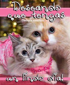 Deseando un lindo dia #animales #gatos - Tarjetitas