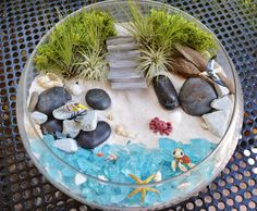 Beach Terrarium Kit Beach Life At The by BeachCottageBoutique