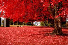 red // Olympia, Washington