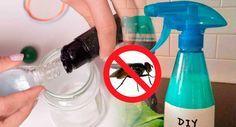 Elimina las moscas de tu hogar para siempre con este truco y mezclando este ingrediente | Trucos de casa