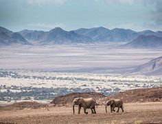 Go in search of Namibia's desert jumbos in Puros, Kunene, Namibia. Photo by Scott Ramsay.