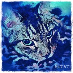Noah keeping the bed warm. (Get your pet's portrait at: www.bztat.com.) #custompetportrait #catart #artcat #digitalart #digital #iphonegraphy #bztatart
