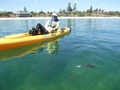 Kayak Shop Australia, the sea kayaking specialists in Melbourne. Offering sea kayak products, hire, rentals, courses and training. Kayak Fishing, East Coast, Kayaking, Melbourne, Coastal, Environment, Australia, Train, Sea