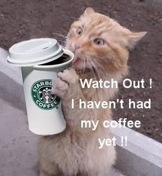 Funny Morning Coffee   Cat Funny Coffee Starbucks Good Morning Cats LOL Laughs Laughing icon ...