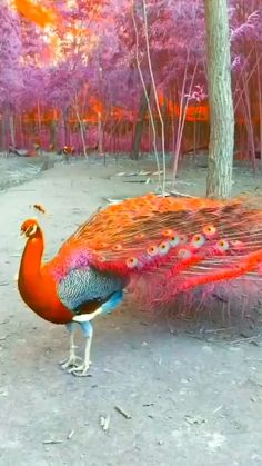 Hermosura total...!! Beautiful Nature Scenes, Most Beautiful Birds, Beautiful Gif, Pretty Birds, Weird Birds, Funny Birds, Exotic Birds, Colorful Birds, Beautiful Creatures