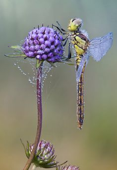 purple flower and a dragonfly