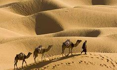 desert sahara - Pesquisa Google