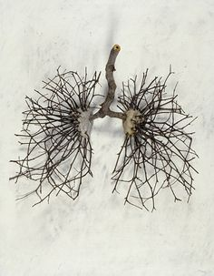 likeafieldmouse:  Ian Crawley- God's Prototype: The Nature of Man: Lungs (2002) - Sticks, stones, graphite and gesso on wood