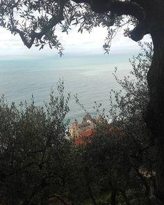 #Camogli salendo. #camoglimia #mare #Levante #rivieralevante #liguriailoveyou #liguria_super_pics #Liguria #liguriainlove #liguriainside #turismoinliguria #ig_Genova #ig_Liguria #igworldclub #igs_photos #instamood #instagenovanelmondo #instagenova #passeggiatacamogli #porticciolodicamogli #italy #italia #Ig_italia #ig_italy by geraldina_morlino
