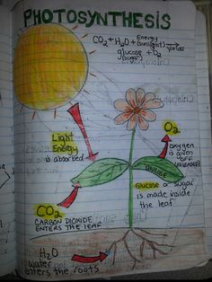 Photosynthesis - Perfect example of a diagram students could do on a SMC shirt from ScienceWear.net.