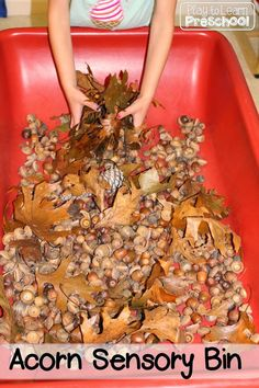 Need a fall sensory bin for your students? Filled with acorns, sticks, leaves, and fall treasures—this bin brings the autumn atmosphere inside the classroom!