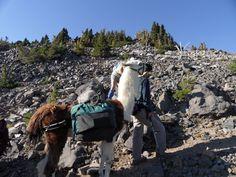 hiking with llamas