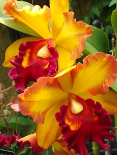Flaming Orchid  ♥ ♥ www.paintingyouwithwords.com