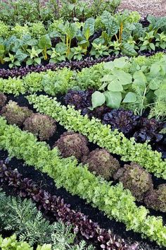 Growing Vegetables 11 plant combos you should grow side-by-sidee - Companion Planting - Companion planting just may help your garden grow. Herb Garden Design, Vegetable Garden Design, Vegetable Gardening, Veggie Gardens, Container Gardening, Backyard Vegetable Gardens, Potager Garden, Veg Garden, Edible Garden