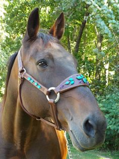 Turquoise & Amethyst Bronc Halter - Inspired Turquoise by <br />Red Turf Ranch Custom Tack<br />Gail Travis
